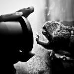 3. místo - Hana Brožková - Animal Curiosity